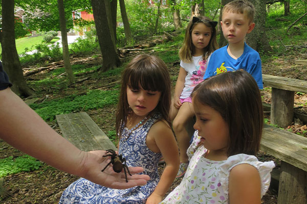 children outside looking at tarantula in man's hand